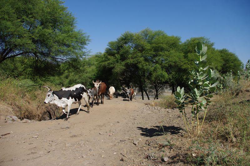 Laatste fotos Ethiopië 032